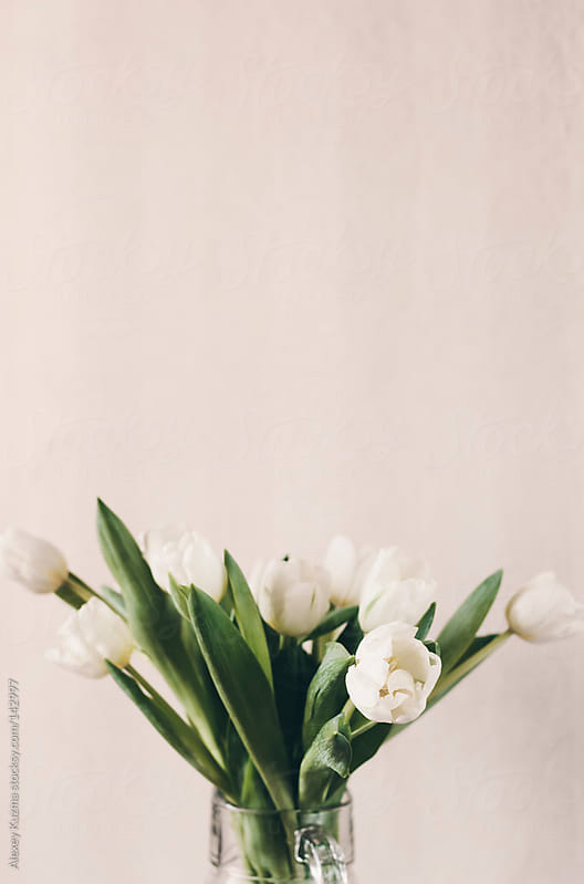 white tulips by Alexey Kuzma for Stocksy United