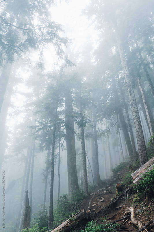 Foggy Forest by Michael Overbeck for Stocksy United