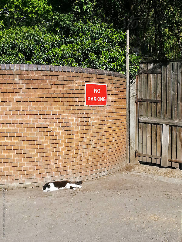 Cat sleeping in the street with a sign that says No Parking by Lucas Ottone for Stocksy United