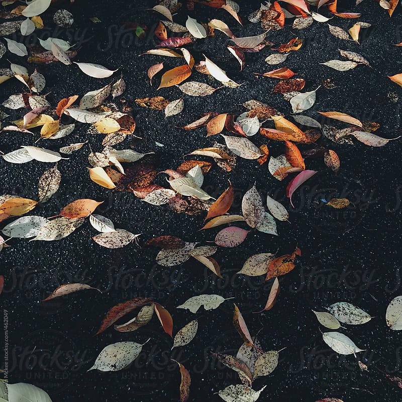 Fallen leaves on a dark sidewalk by Kirstin Mckee for Stocksy United