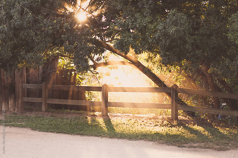 sunset through the trees in the park by Javier Pardina for Stocksy United