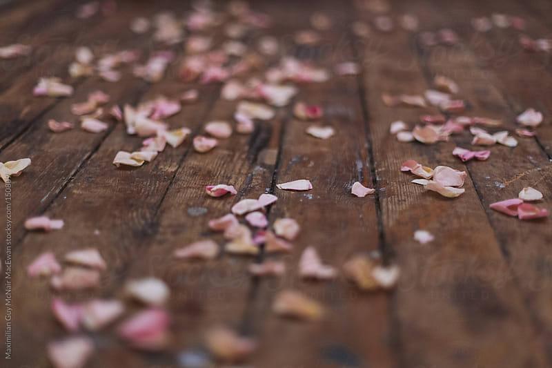Rose Petals by Maximilian Guy McNair MacEwan for Stocksy United