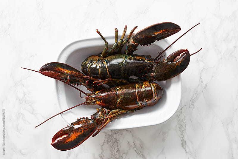 Two lobsters on plate by Martí Sans for Stocksy United