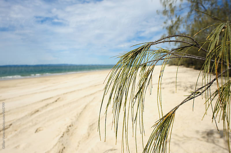 empty Qld beach with 4x4 tracks by Gillian Vann for Stocksy United