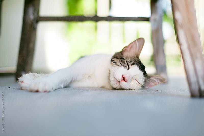 Close-up of kitten sleeping on the balcony in summer afternoon by Laura Stolfi for Stocksy United