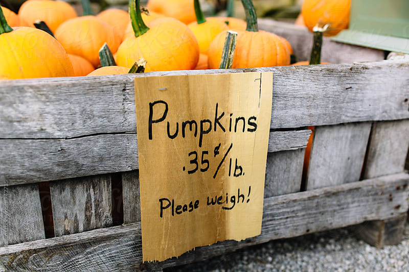 pumpkins for sale by Maria Manco for Stocksy United