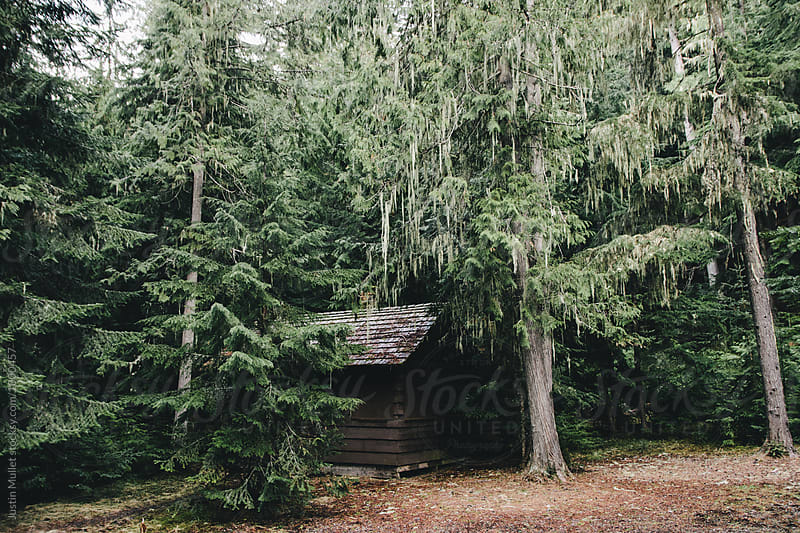 Old cabin in the woods by Justin Mullet for Stocksy United