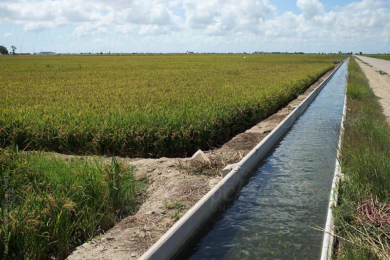 a paddy field in the Ebro Delta, in Catalonia, Spain by juan moyano for Stocksy United