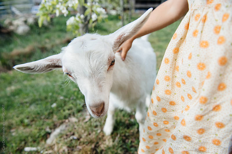 Little farm girl touches her pet goat by Cara Dolan for Stocksy United