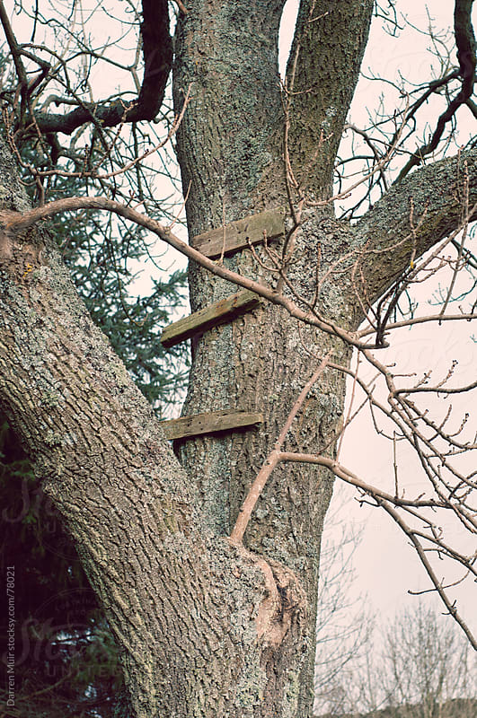 Tree ladder. by Darren Muir for Stocksy United