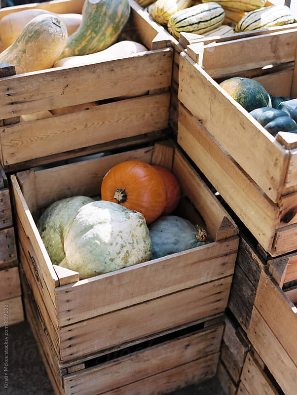 crates of pumpkins by Kirstin Mckee for Stocksy United
