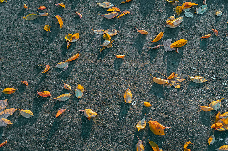 Fall leaves on pavement by Richard Brown for Stocksy United
