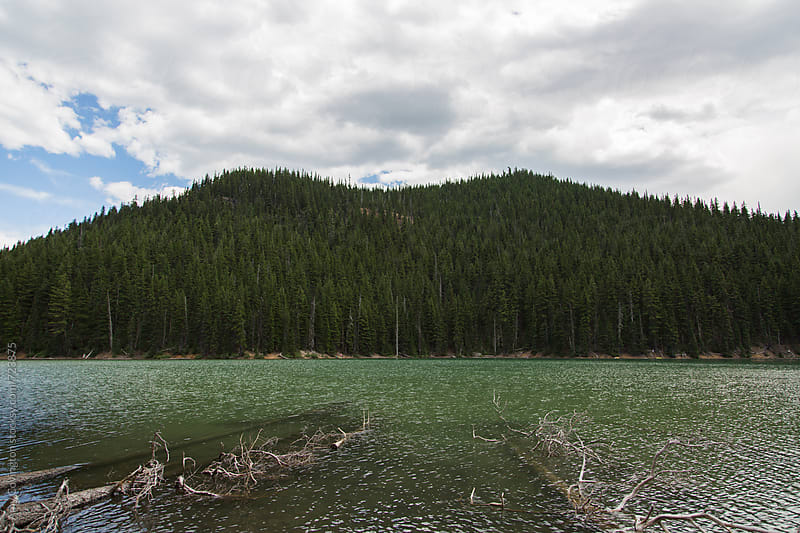 Emerald lake with fallen trees by Amy Covington for Stocksy United