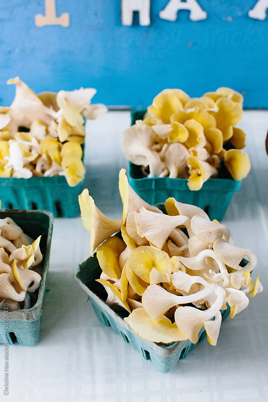 farmstand mushrooms by Christine Han for Stocksy United