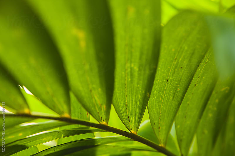 Sunlight shines through a plant in Tahiti in late afternoon light. by Robert Zaleski for Stocksy United