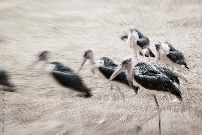 Marabou stork by Pansfun Images for Stocksy United