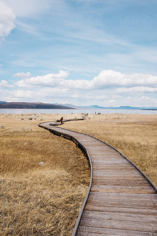 boardwalk path stretching far into distance at lake by Jesse Morrow for Stocksy United