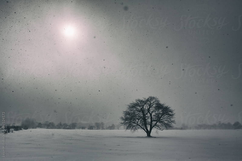 Lonely Tree in the Winter by Jason Hill for Stocksy United