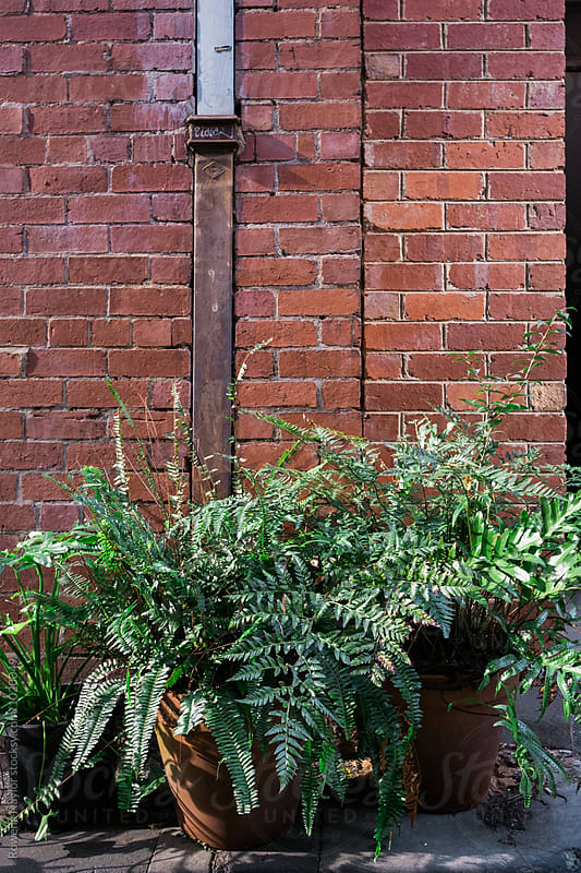 Urban Garden in city laneway by Rowena Naylor for Stocksy United