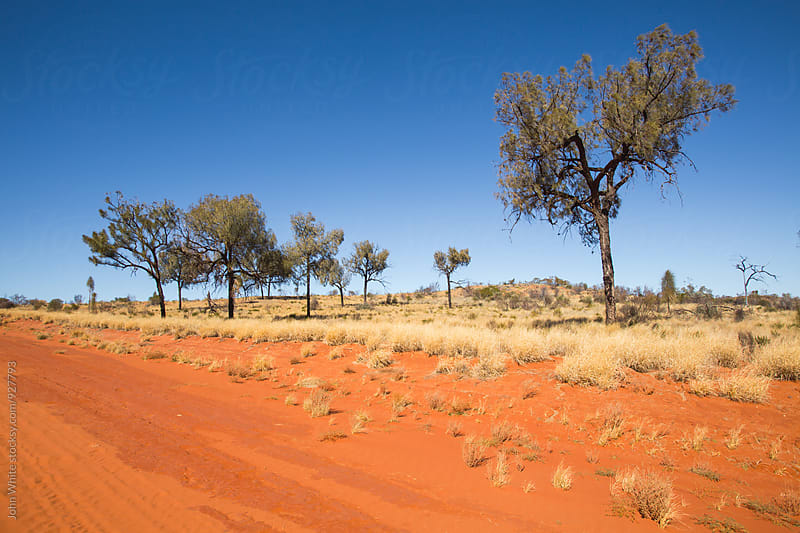 Red sand of central Australia by John White for Stocksy United