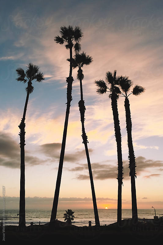 Palm Trees by Jesse Weinberg for Stocksy United