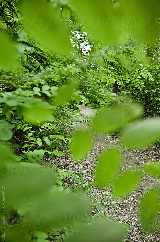 Green Branches partly Hiding a Path in the Municipal Woods  by Claudia Lommel for Stocksy United