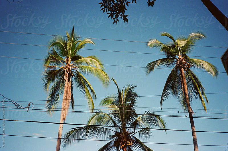 Palm Trees by Gavin Thomas for Stocksy United