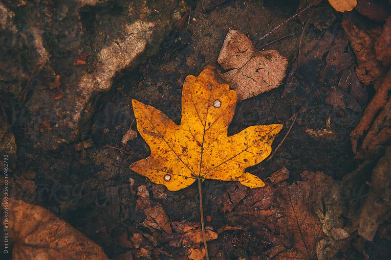 Autumn background by Dimitrije Tanaskovic for Stocksy United