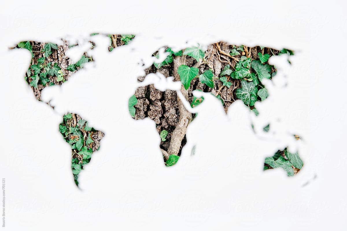 Stencil World Map.Ivy On A Tree Bark Captured Through A World Map Stencil Stocksy United