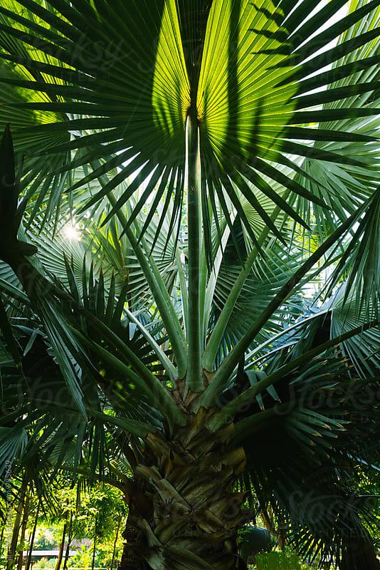 tropical palm tree leaf by jira Saki for Stocksy United