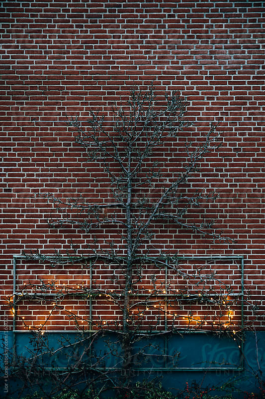 Dry tree with lights against brick wall by Lior + Lone for Stocksy United