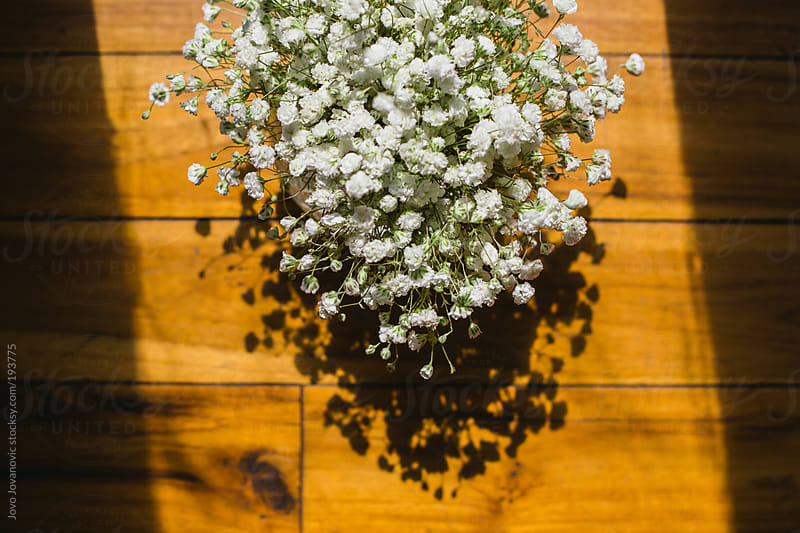 White flowers on wooden table by Jovo Jovanovic for Stocksy United