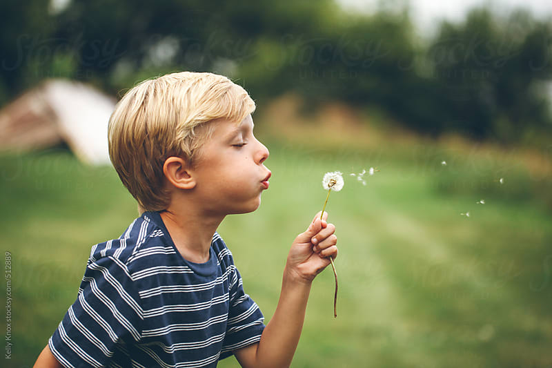 boy blowing the seeds from a dandelion by Kelly Knox for Stocksy United