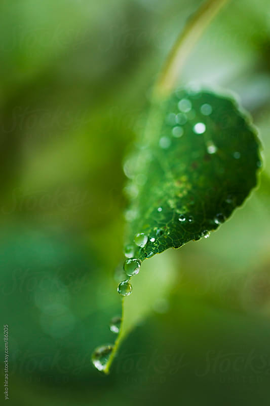 Raindrops on leaf by yuko hirao for Stocksy United