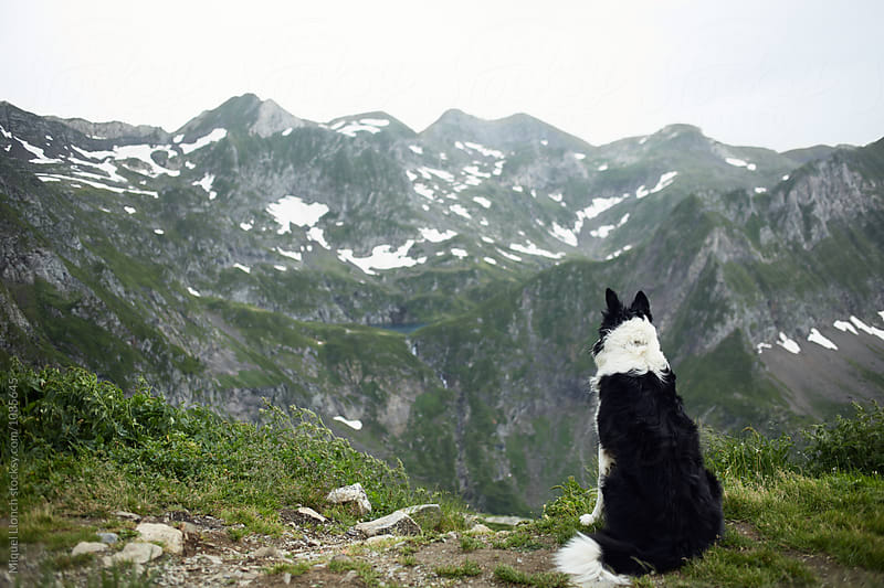 Shepherd dog resting and observing the mountain landscape by Miquel Llonch for Stocksy United