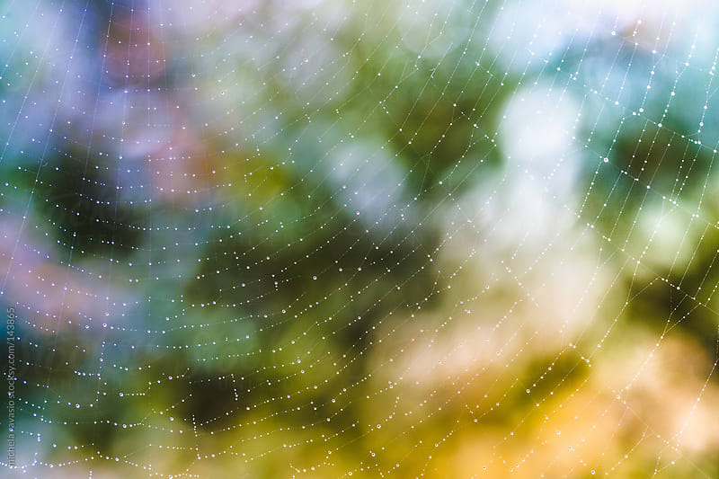 Spider web with water drops by michela ravasio for Stocksy United