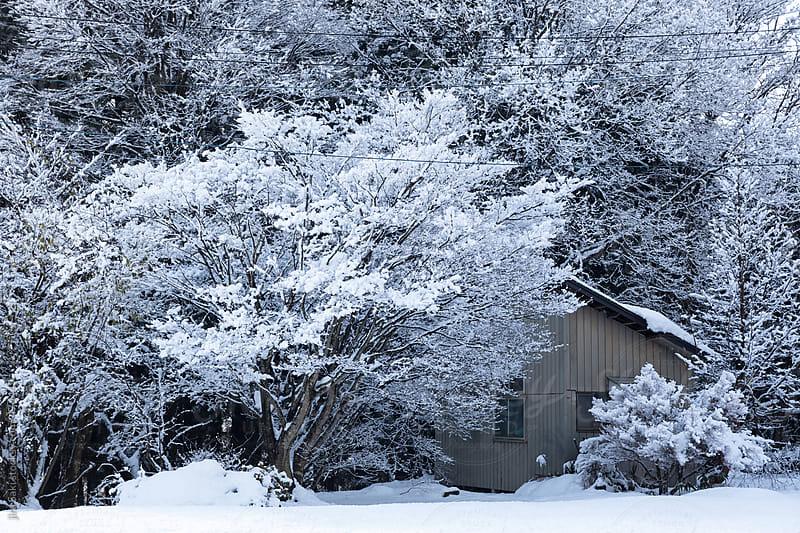 cabin by jira Saki for Stocksy United