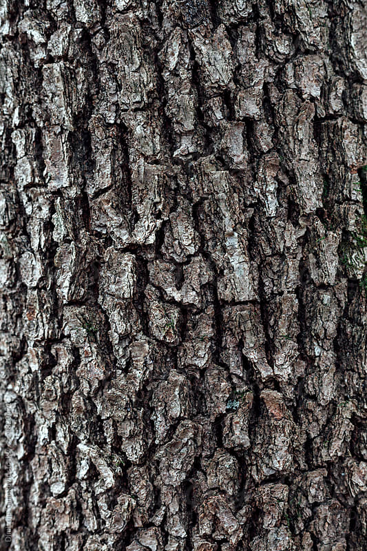 Closeup of tree trunk in the forest by Dimitrije Tanaskovic for Stocksy United