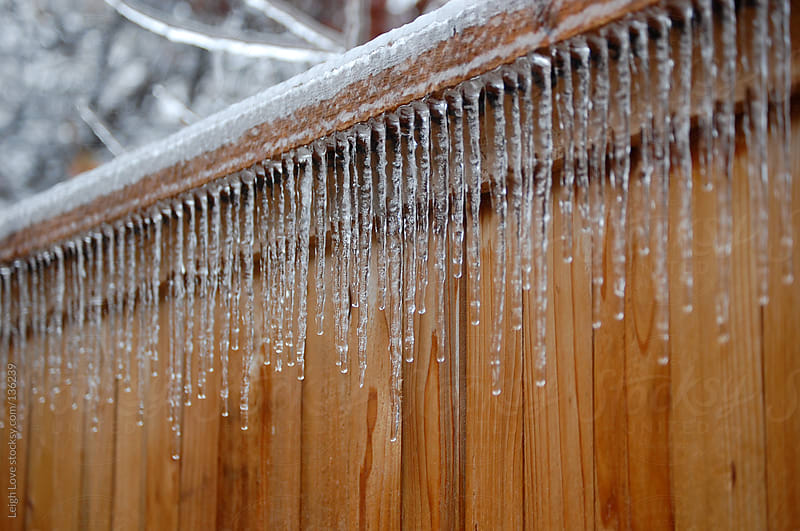 Icicles Hanging From Cedar Fence by Leigh Love for Stocksy United