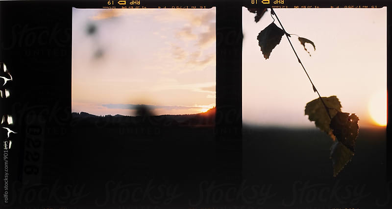 Film double shot of sunset and birch branch  by rolfo for Stocksy United