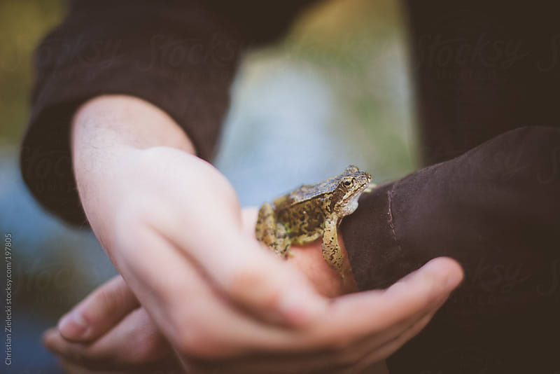 a frog sitting on an arm by Christian Zielecki for Stocksy United