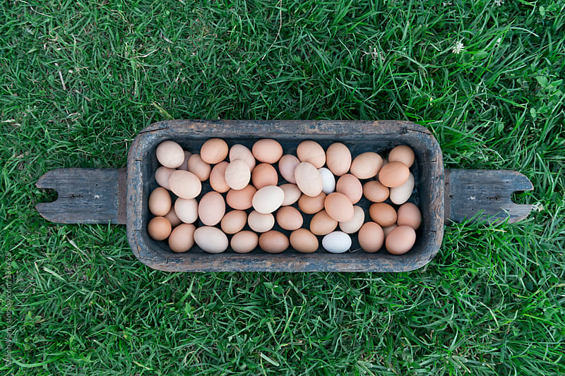 eggs in a wooden tray by Gillian Vann for Stocksy United