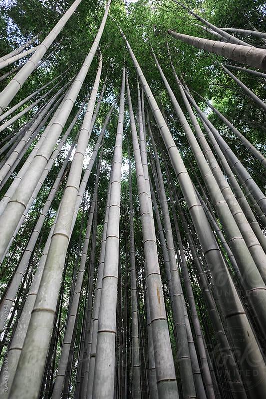 Arashimaya Bamboo Forest, Kyoto by Rowena Naylor for Stocksy United