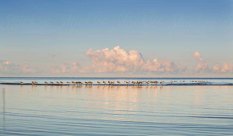 Flock of sea birds walking in shallow water by Lior + Lone for Stocksy United