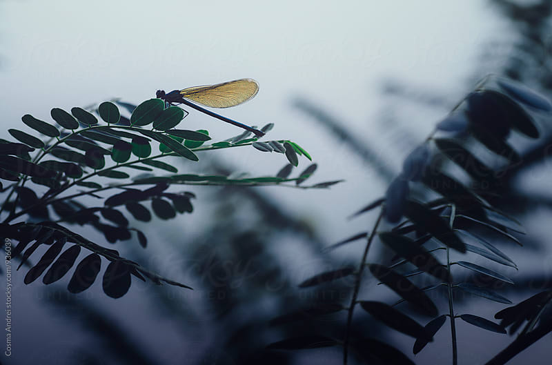Dragonfly on green leaf by Cosma Andrei for Stocksy United