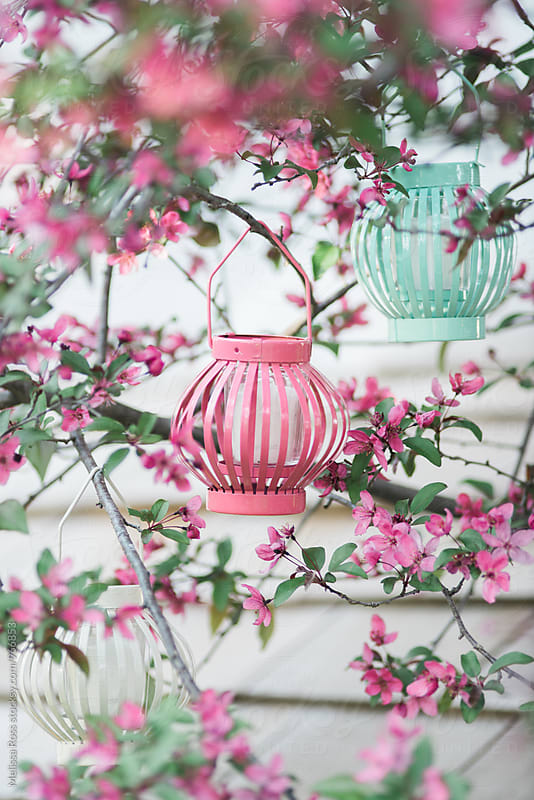 Three pastel colored lanterns hanging in a tree. by Melissa Ross for Stocksy United