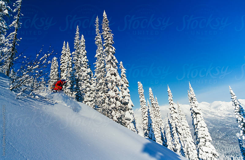 Man tree skiing powder snow in winter mountains of Red Mountain, British Columbia. by Søren Egeberg Photography for Stocksy United