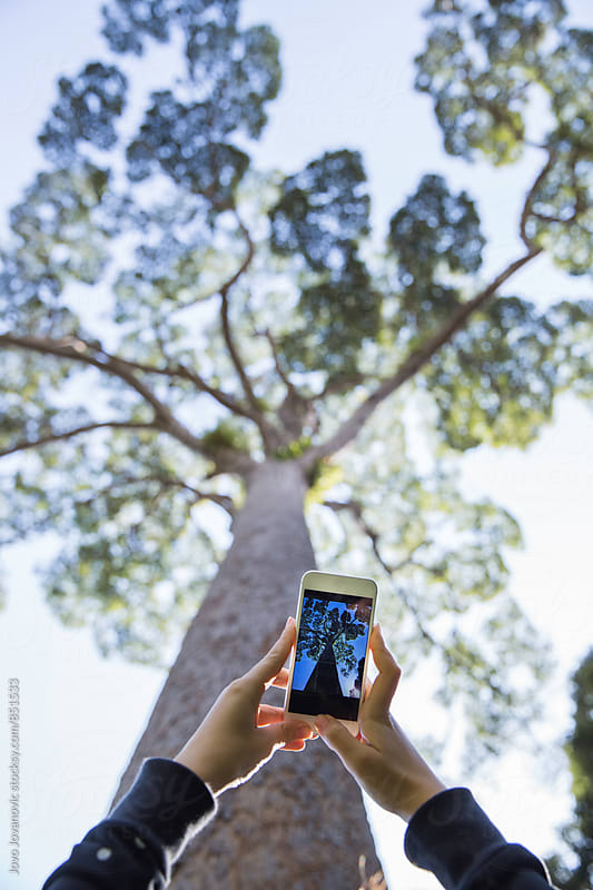 Taking a photo of a tree by Jovo Jovanovic for Stocksy United