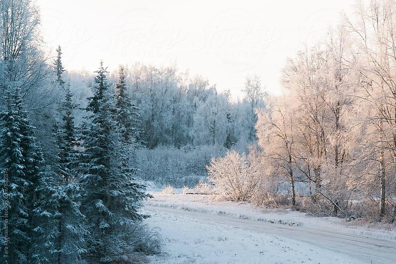 winter landscape - light and dark by Tara Romasanta for Stocksy United