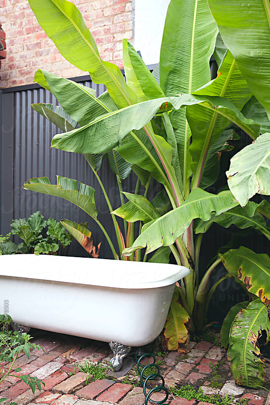 Outdoor claw foot bath surrounded by greenery and plants by Natalie JEFFCOTT for Stocksy United